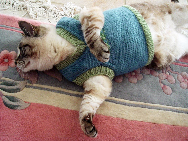 Knitting Patterns For Dogs And Cats : Cats Wearing Sweaters