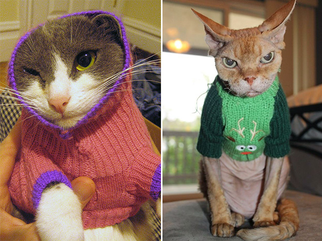 Why Can T Cats Wear Sweaters