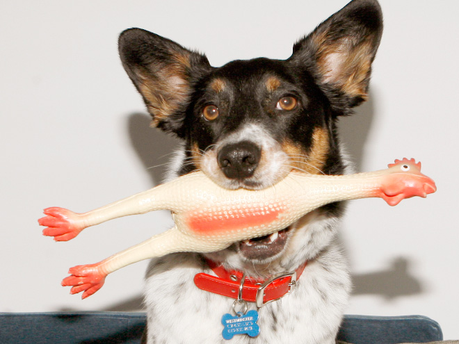 Dogs That Have No Clue How Stupid They Look With Their Toys
