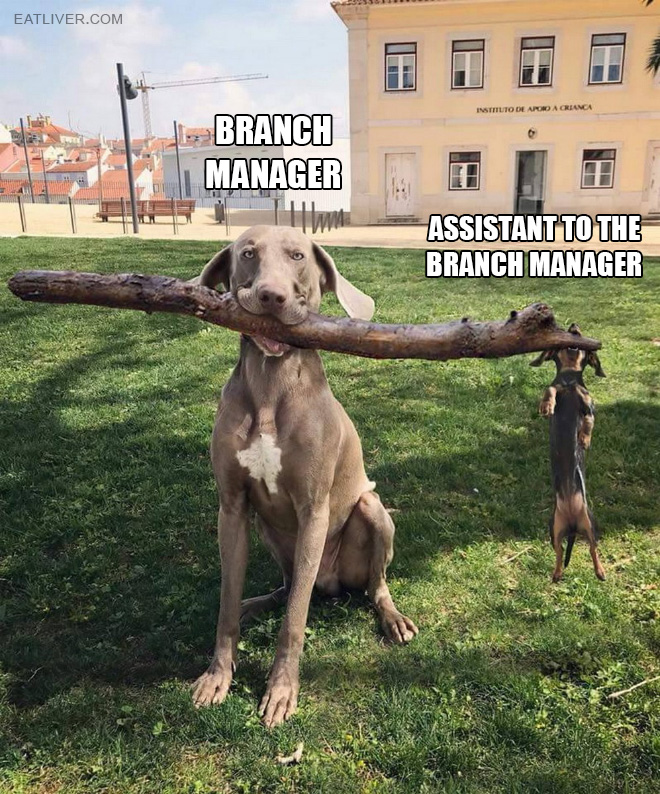 Visual representation of how actual assistant managers do their best.