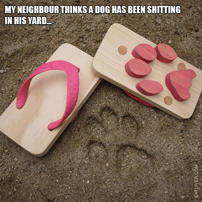My neighbour thinks a dog has been shitting in his yard...