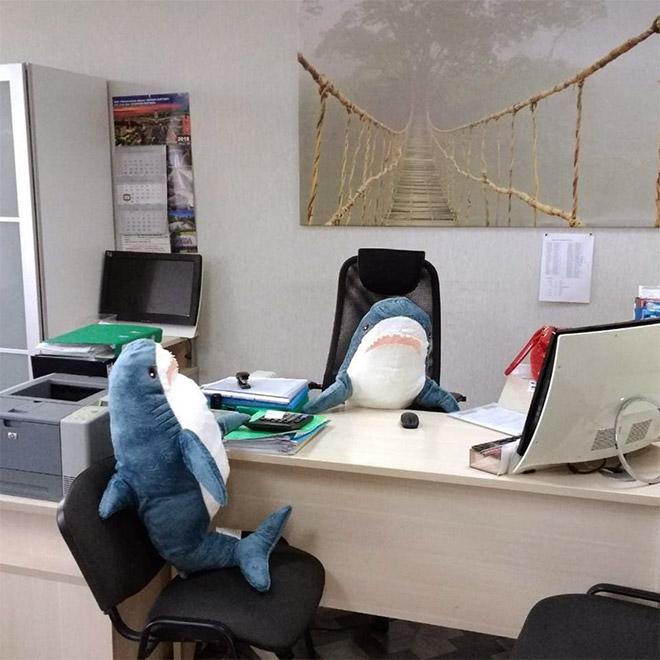 Business sharks.