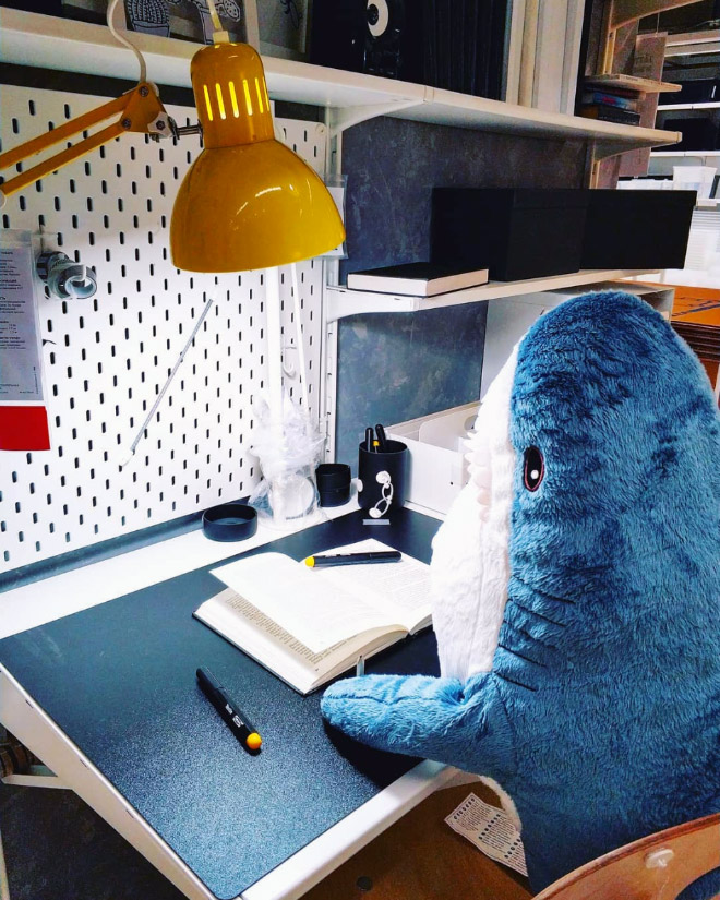 Shark at work.