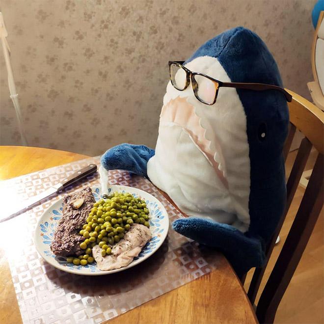 Shark having a nice dinner.