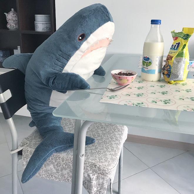 Shark's breakfast.