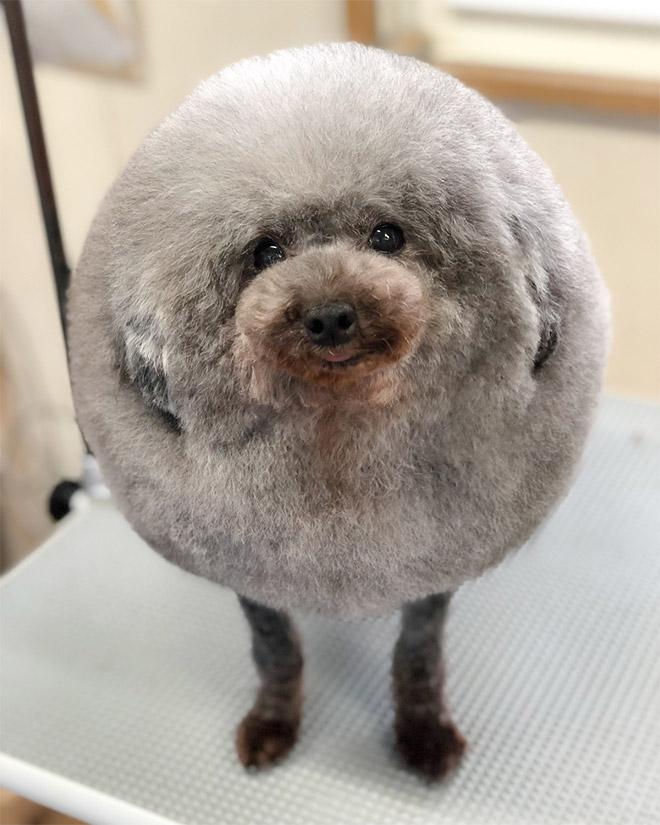World's roundest dog.