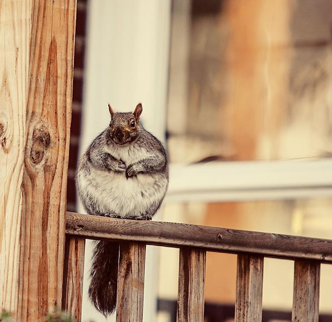 World's roundest squirrel.