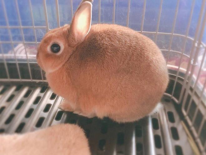 Cute round rabbit.