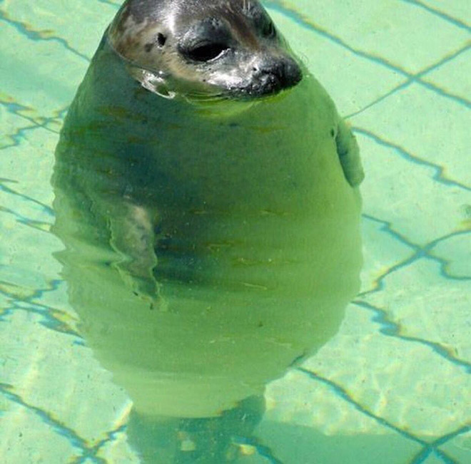 Funny round seal.