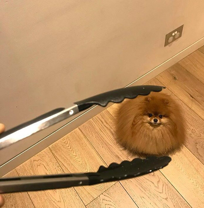 Funny round dog.