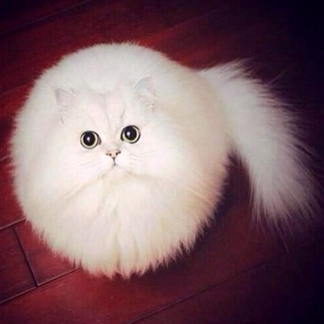 Funny round cat.