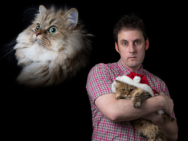 Hilarious Christmas photo with a cat.