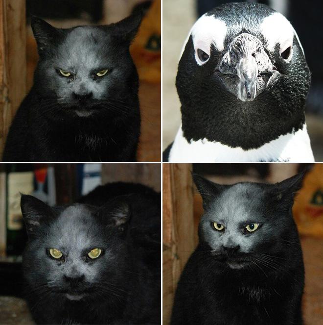 Metalhead cat and penguin.