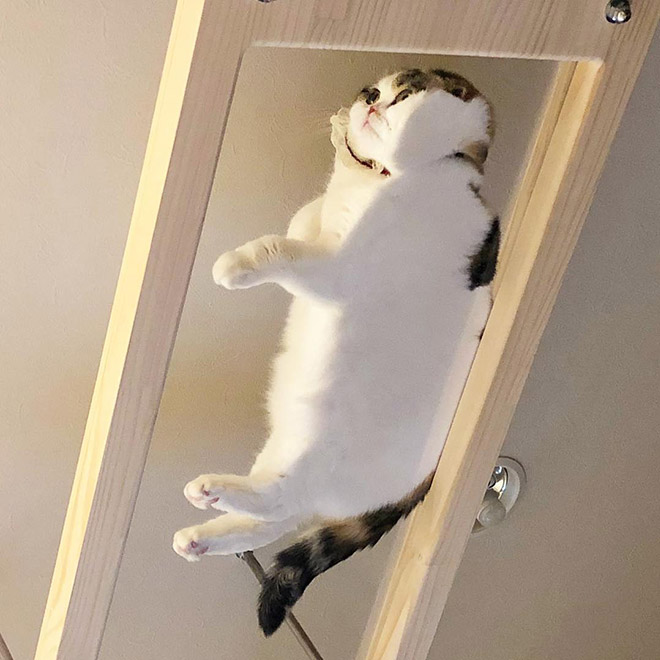 cat sleeping on a glass table.