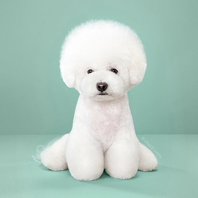 After funny dog grooming.