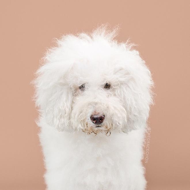 Before dog grooming.