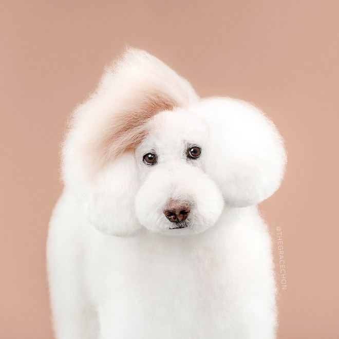 After dog grooming.