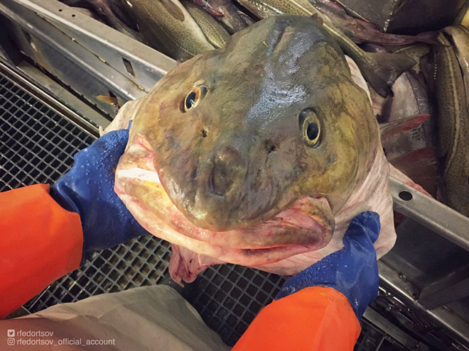 Funny deep sea fish.
