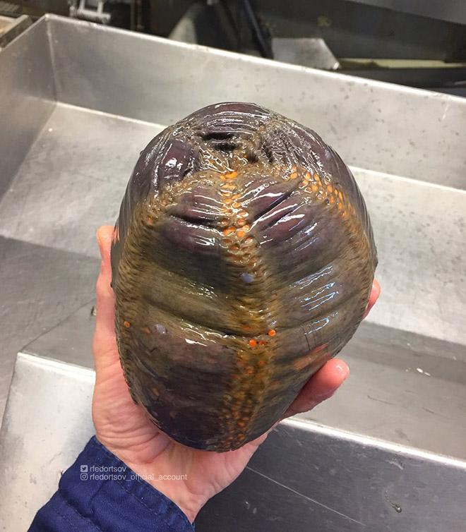 Weird deep sea creature.