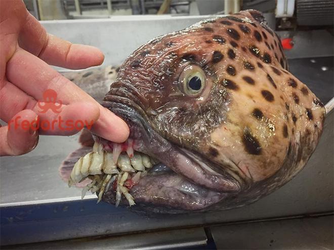 Awkward deep sea fish.