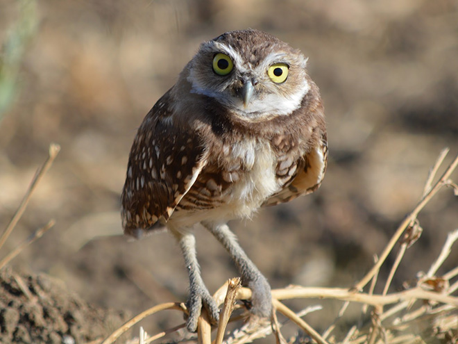 Hilarious angry owl.