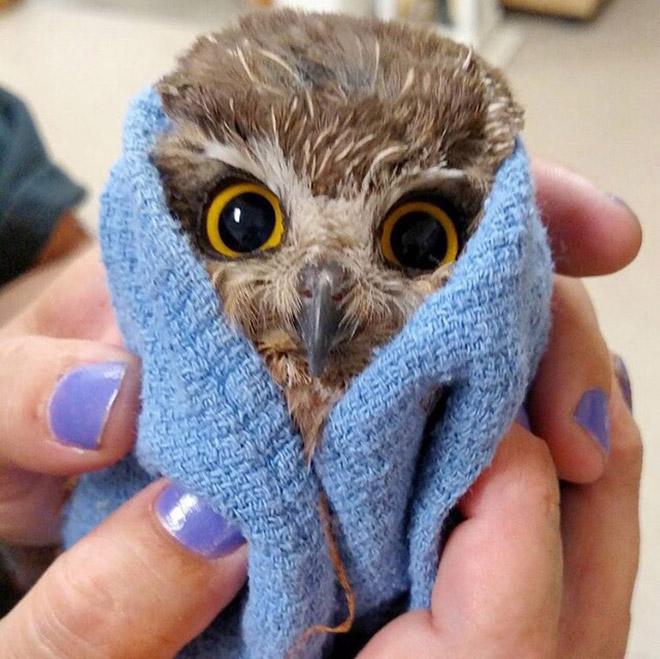 Funny angry owl baby.