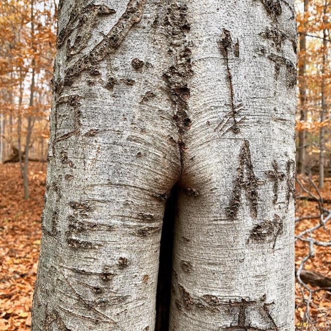 Hank Hill's body type tree.
