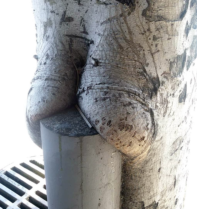 Just look at the cakes on this tree!