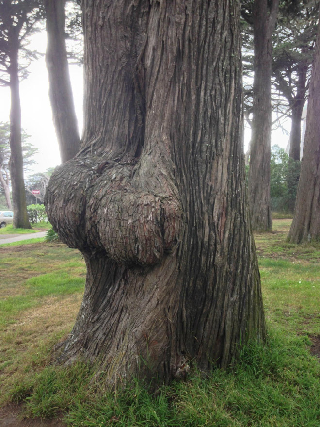 Is this the funniest tree or what?