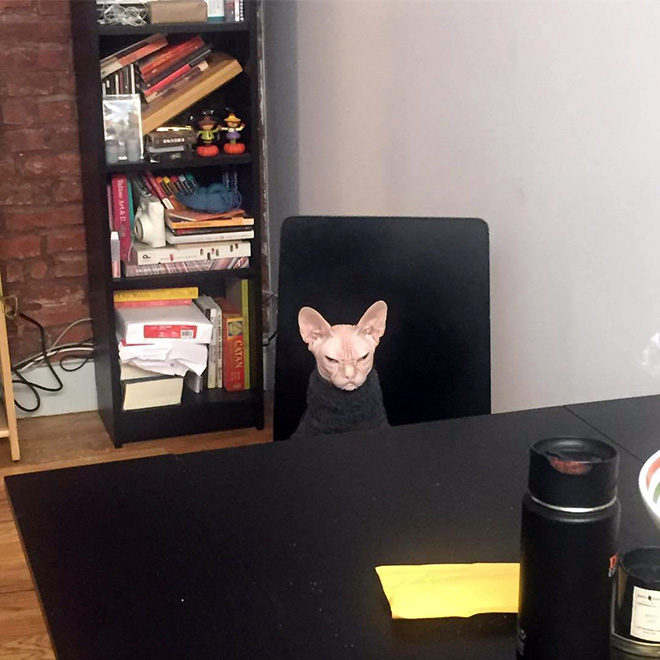 Grumpy cat sitting at the table.