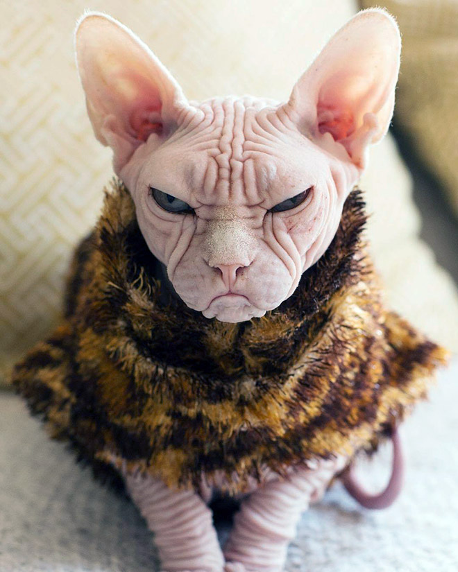 Angriest cat ever.