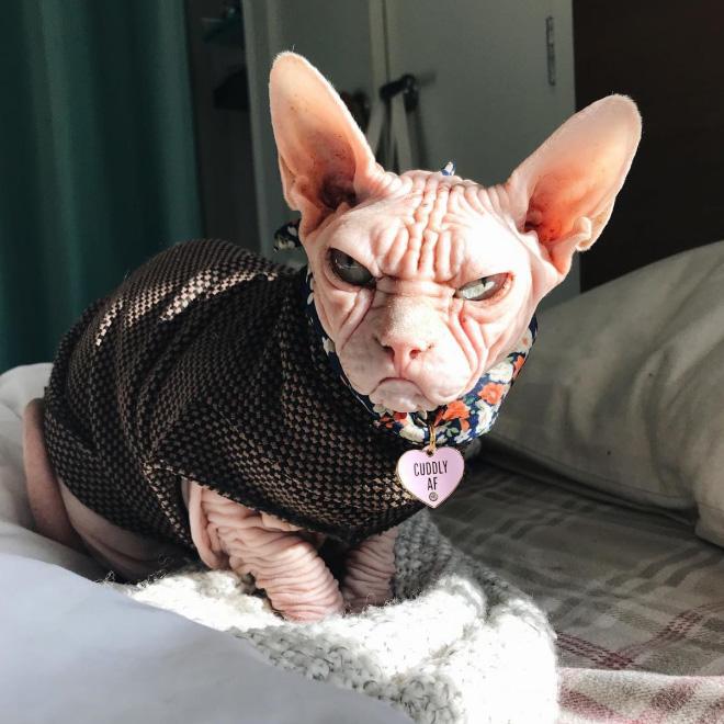This cat despises everything.
