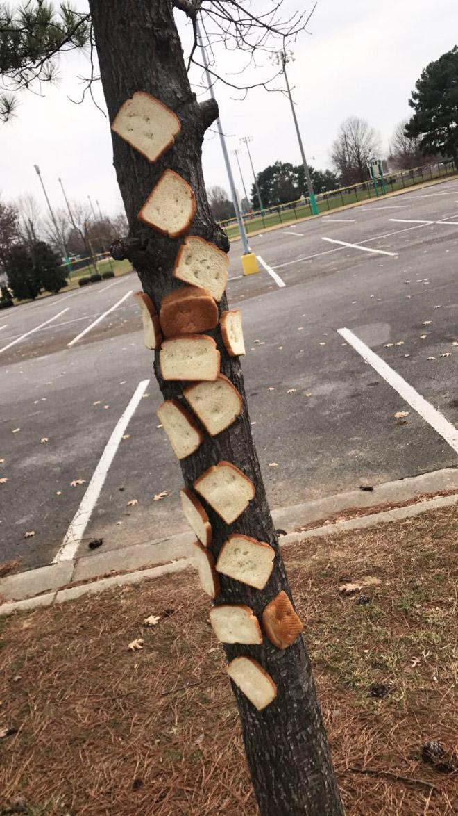 Inbread tree.