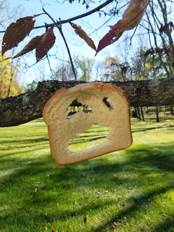 Toast stapled to a tree branch.