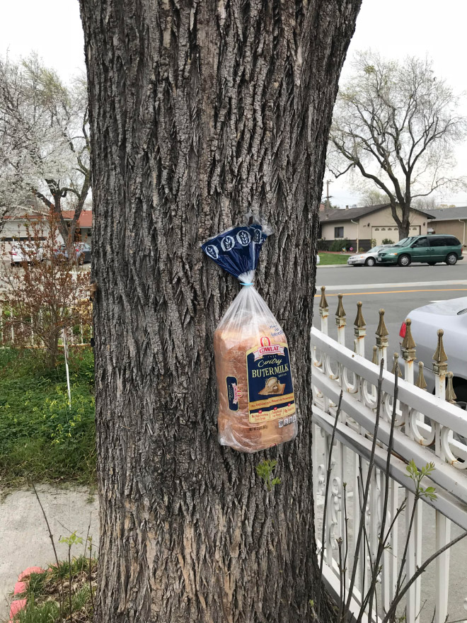 Bread stapled to a tree for no good reason.