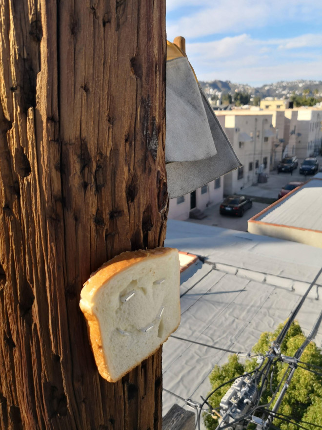 Smiling bread slice stapled to a tree.