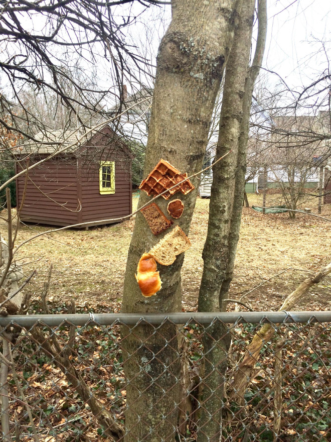 Various types of bread stapled to a tree.