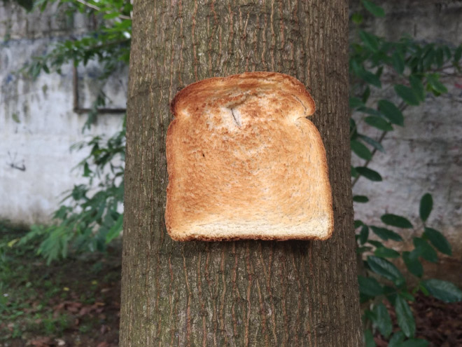 Toast stapled to a tree.