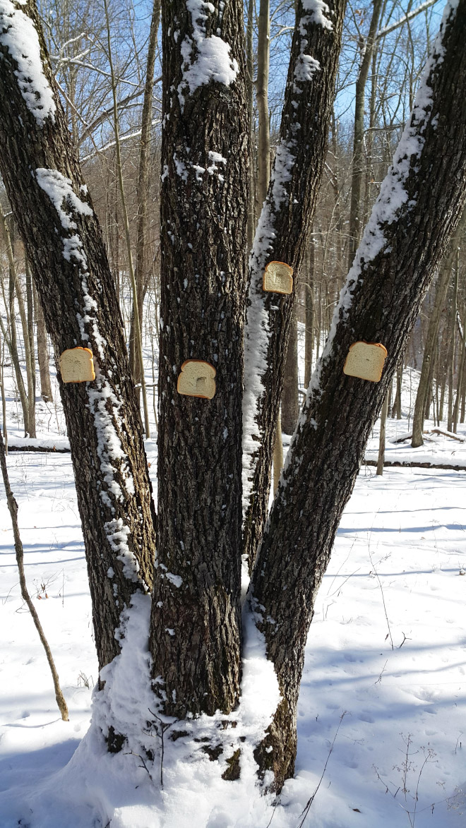 The bread tree.