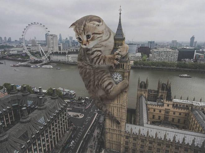 Huge kitten vs. London.