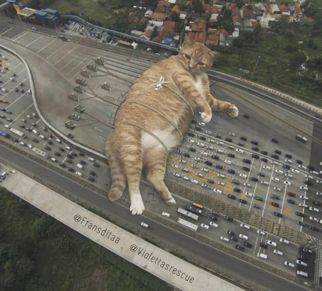 Huge cat blocking the traffic.
