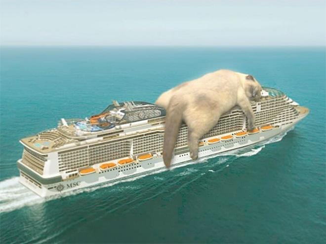 Huge cat vs. cruise ship.