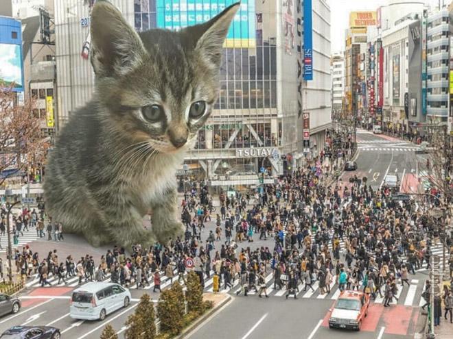 If huge kittens lived among us...
