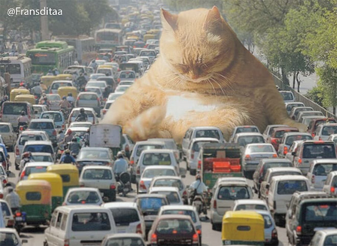 Sleepy giant cat blocking the traffic.