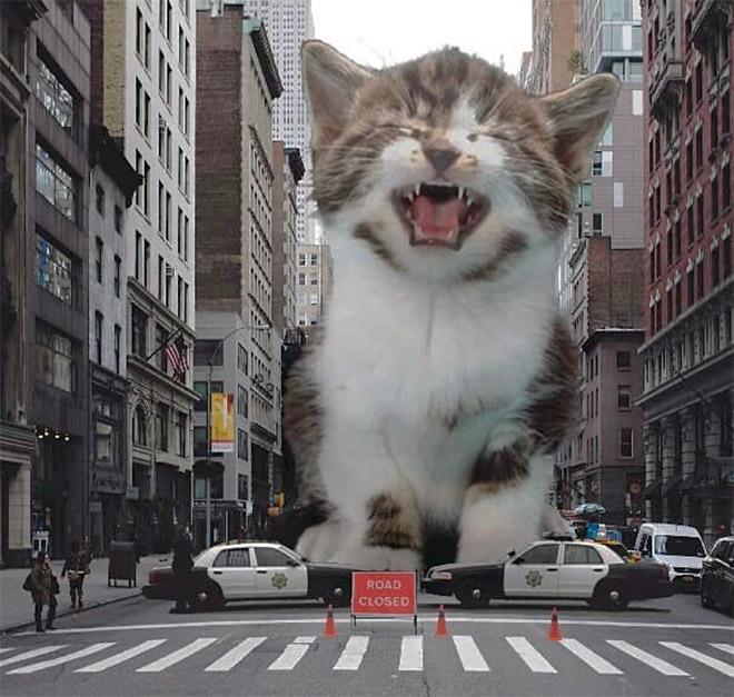 Huge kitten attacks the city.