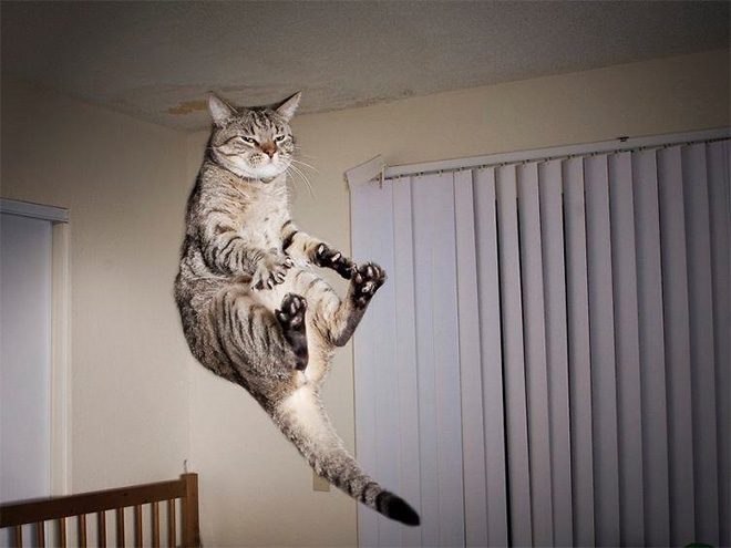 Cat being abducted by an UFO.