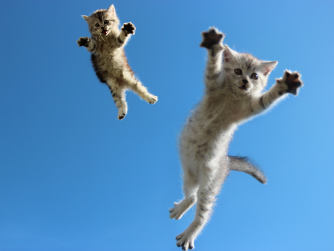 Cats leaving planet Earth.