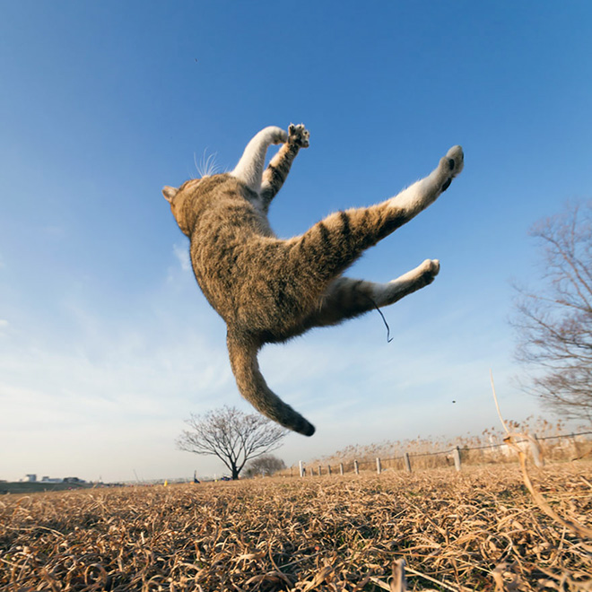 Cat leaving our planet.
