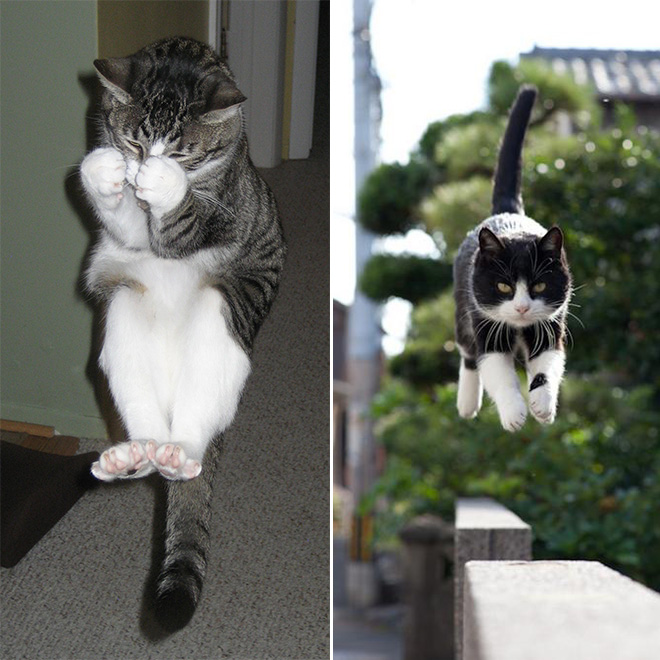 Cats being abducted by aliens.