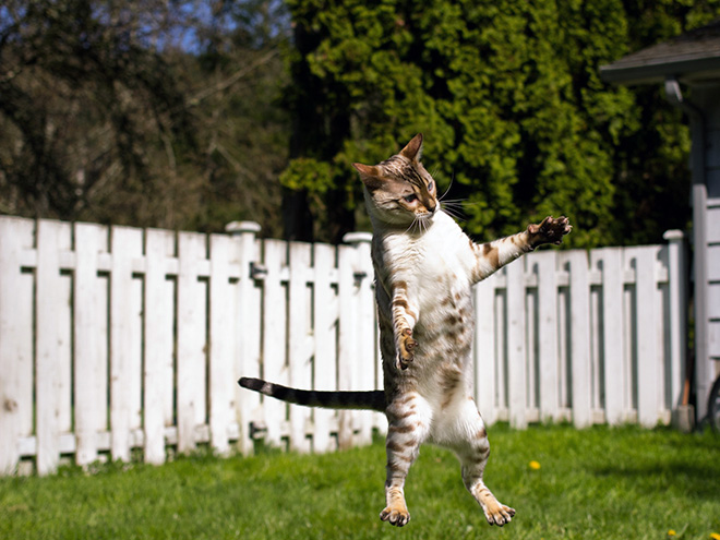 Cat being taken into UFO by aliens.